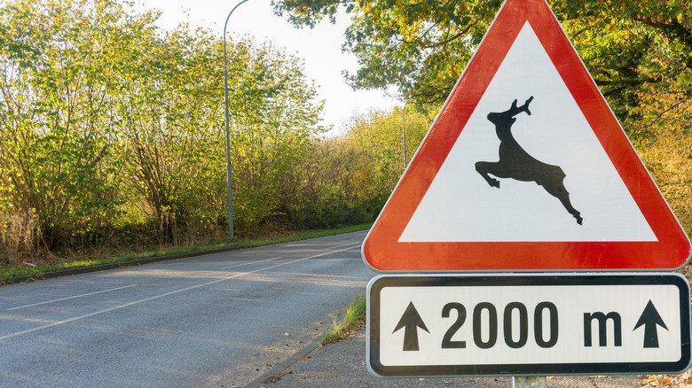 Springendes Wild: Wer dieses Warnschild sieht, sollte besonders vorsichtig fahren.