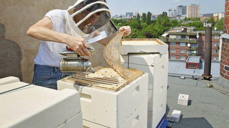Viel Arbeit: Jetzt im Frühjahr müssen die Bienen gezählt werden. Foto: Getty