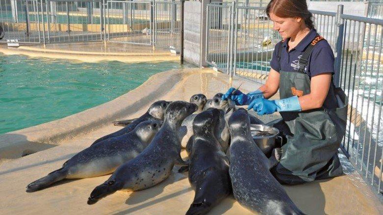 Fütterung: Der Nachwuchs frisst gerne frischen Hering und kann kräftig zubeißen. Foto: Seehundstation Norddeich