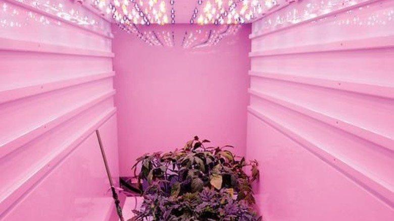 So lässt farbiges LED Licht von Osram die Pflanzen sprießen