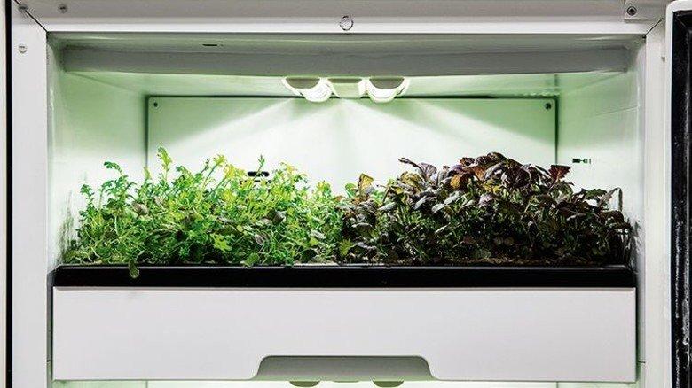 Mithilfe spezieller Wachstumslampen gedeiht Salat auf engstem Raum. Foto: Osram
