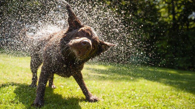 Wasser – ein tierischer Spaß für unsere zwei- und vierbeinigen Mitbewohner.
