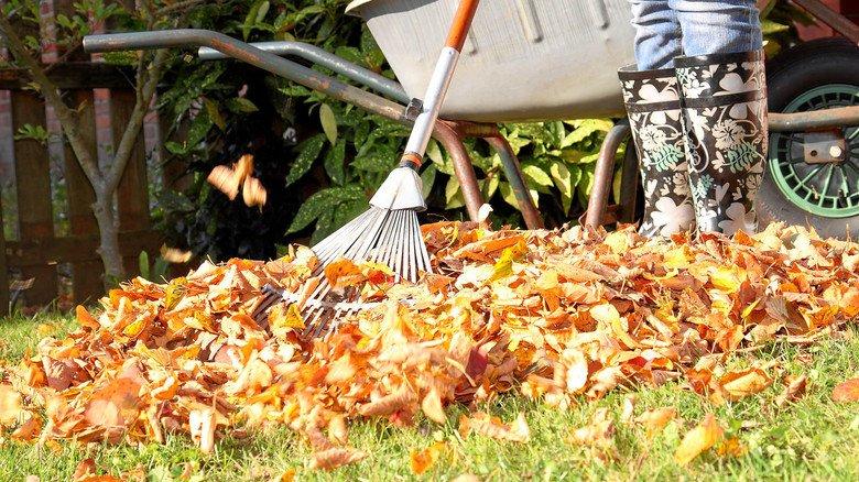Typische Gartenarbeit im Herbst: Das Laub sollte man jedoch nicht komplett entsorgen. Es dient Pflanzen und Tieren im Winter als Kälteschutz.