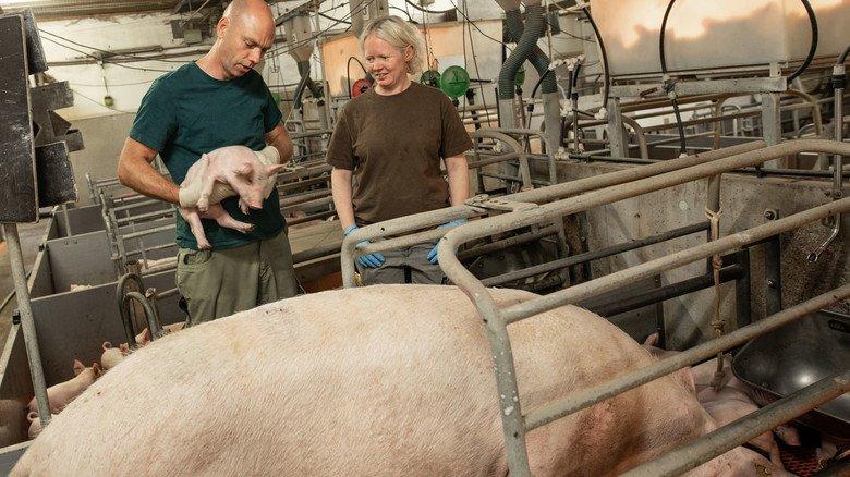 Stallbedingungen: Die Entwicklungen von Boehringer Ingelheim finden auch in der Schweinezucht Anwendung.