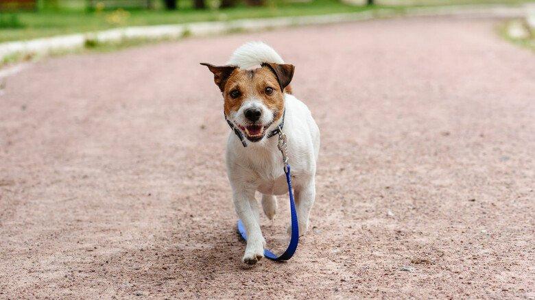 Ganz allein: Was tun, wenn kein Besitzer des Hundes in Sicht ist? Einfach mit nach Hause nehmen? Der Rat der Expertin – besser nicht!