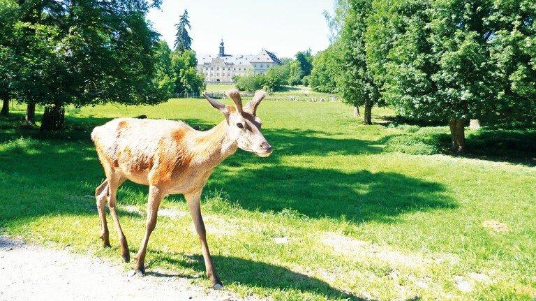 Herrschaftlich: Wildpark Schloss Tambach mit Flusslandschaft, Tieren und Skulpturen.