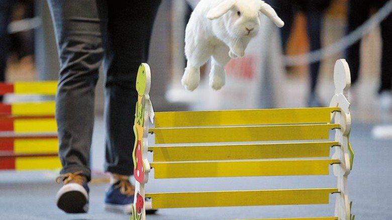 """""""Animal"""": Hier kann man etwa einen Hindernislauf für Hasen sehen. Foto: Veranstalter"""