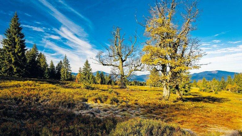 Erholungsort: Im Nationalpark Bayerischer Wald ist die Vegetation ursprünglich und naturbelassen.