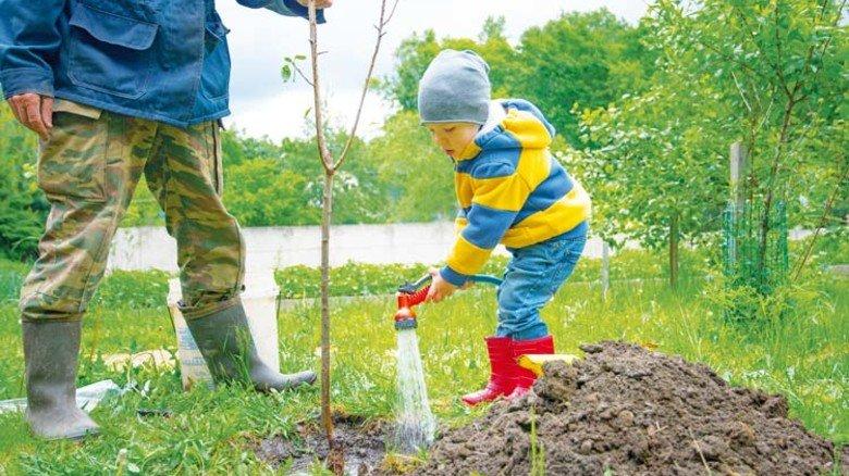Achtung: Mal eben ein Bäumchen pflanzen? Das kann später Ärger geben. Foto: Adobe Stock