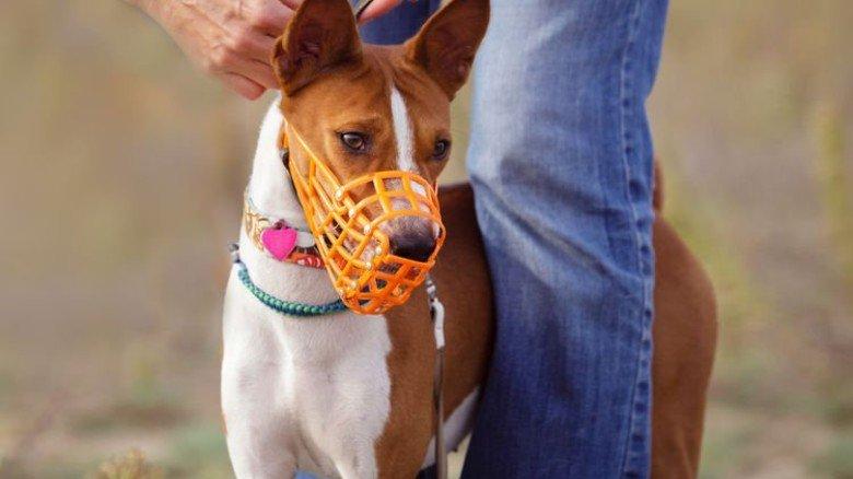 Muss leider sein: Ein Maulkorb für manche Hunderassen.
