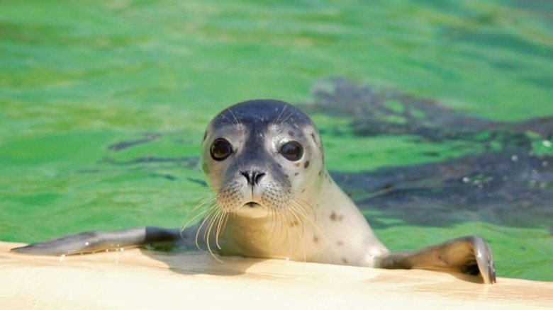 Verwaist: Oft sind Menschen schuld an der Trennung von Mutter und Jungtier. Foto: Seehundstation Norddeich