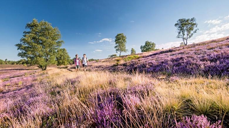 Naturerlebnis: Die Lüneburger Heide ist genau das Richtige für Menschen, die sich gern bewegen.