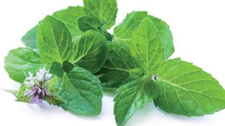 Begehrt: Menthol ist der meistverkaufte Aromastoff der Welt. Foto: Fotolia