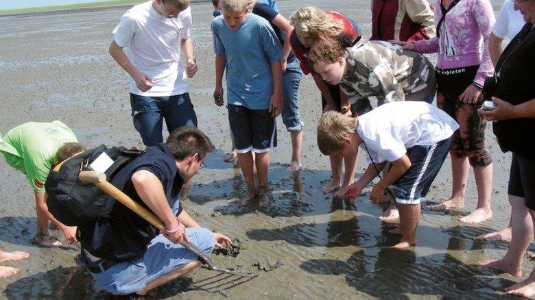 Wanderung: Wattführer und Biologen informieren über den Lebensraum Wattenmeer. Foto: Seehundstation Norddeich