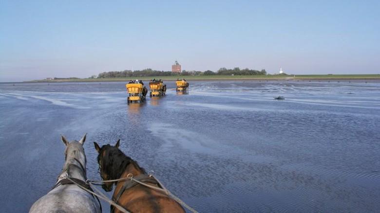 Erlebnis Wattenmeer: Mit der Kutsche von Cuxhaven zur Insel Neuwerk. Foto: Körber