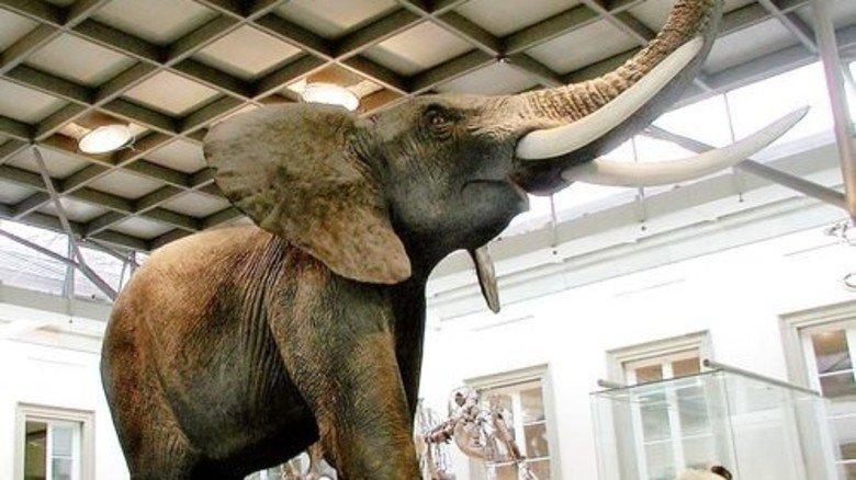 Imposant: Dieser riesige Elefant begeistert die Besucher. Foto: Harling