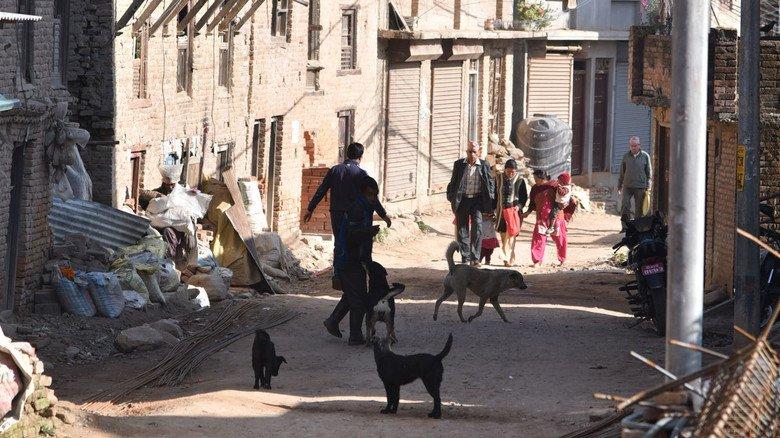 Streunende Hunde sind in Nepal ein großes Problem, denn sie verbreiten Tollwut...
