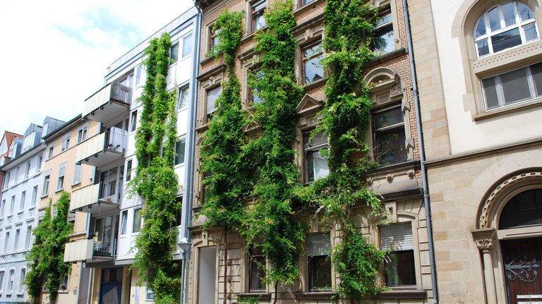 Lebendiges Grün an der Fassade: Das geht bei alten Gebäuden...