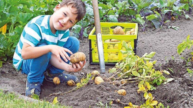 """Schwaben: Dem """"Erdapfel"""" spüren Radler auf der """"Kartoffelroute"""" nach. Foto: Fotolia"""