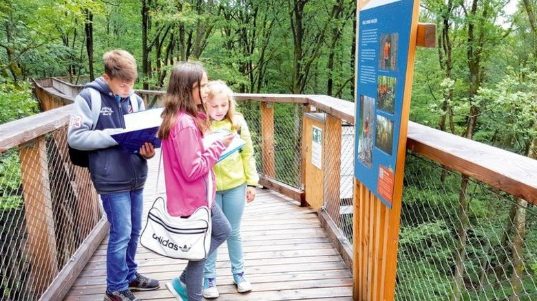 Wissenswertes: Lehrtafeln auf dem Baumwipfelpfad Steigerwald. Foto: Struck