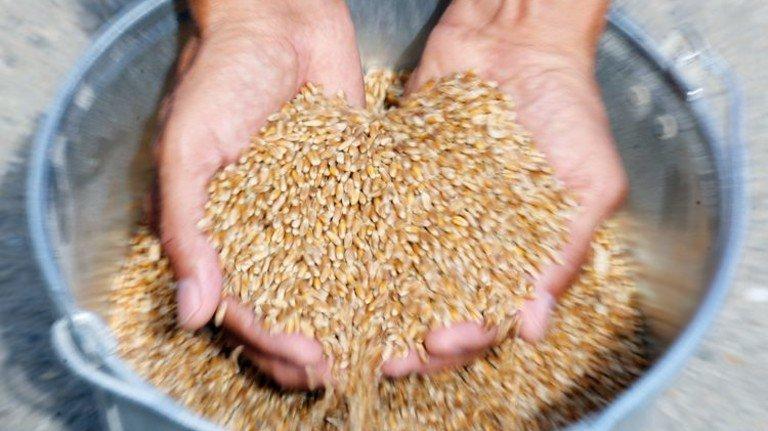 Weizen genug: Russlands Bauern haben dieses Jahr eine Rekordernte eingefahren. Foto: Getty