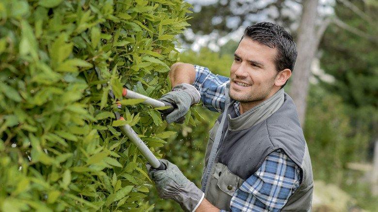 Regelmäßig Stutzen: Wie oft Hecken, Bäume und anderes Grün geschnitten werden müssen, hängt vom Abstand zum benachbarten Grundstück ab.