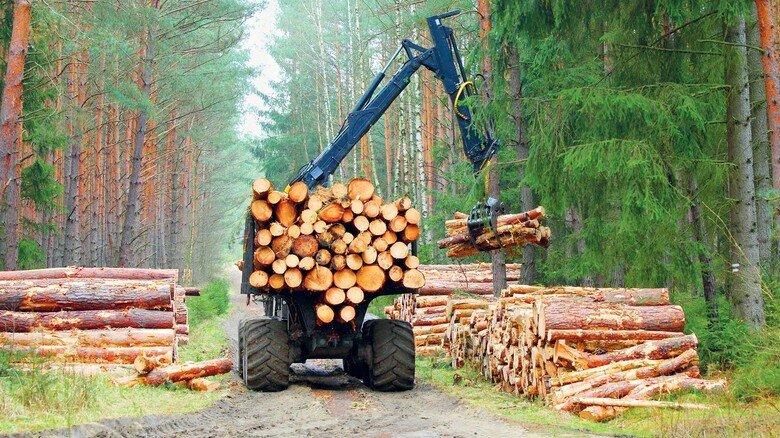 Holztransporter bei der Arbeit: Ein großer Teil der Ernte wird exportiert, etwa in die USA und nach China.