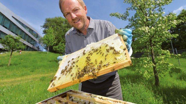 Angstfrei: Hobby-Imker Rainer Grendel mit Bienen, die auf dem Firmengelände von Dräger in Lübeck leben. Foto: Christian Augustin