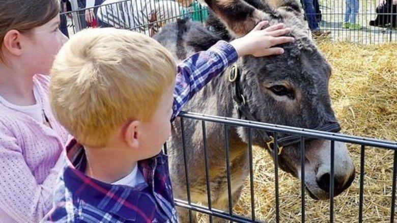 Den Palmesel streicheln: Das lieben Kinder. Foto: Buder