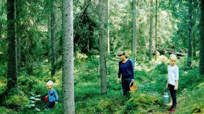 Feuchte Waldböden: In höheren Lagen sind die Erfolgschancen gut. Foto: Plainpicture