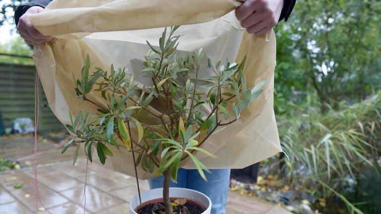 Wenn besonders eisige Temperaturen herrschen, kann Vlies die Pflanzen vor Frost schützen.