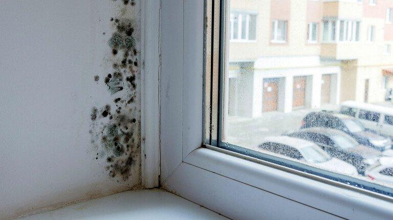Ärgerlich: Schimmel am Fenster kann durch eine schlechte Dämmung oder falsches Lüften entstehen.