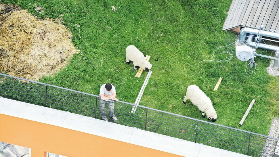 Grünes Dach: Da fühlen sich sogar die Schafe wohl, wie hier hoch oben im Werksviertel in der Landeshauptstadt München.