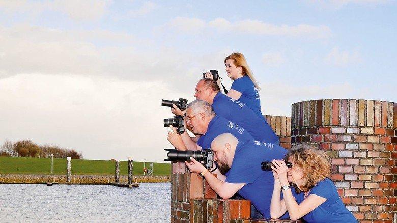 Wenn die Schweinswale kommen, klicken die Kameras.