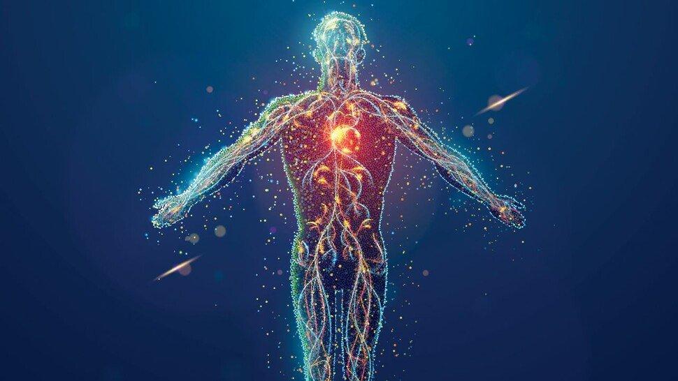 Motor des Lebens: Im Schnitt pumpt das Herz eines Menschen am Tag 8.000 Liter Blut durch den Körper.