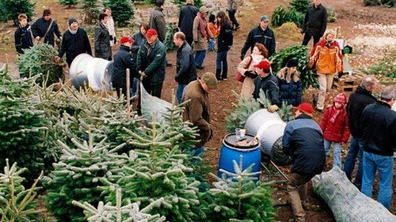 Vielerorts hat sich das Weihnachtsbaumschlagen mittlerweile zu einem kleinen Event gemausert: Foto: Gutsverwaltung Schönau
