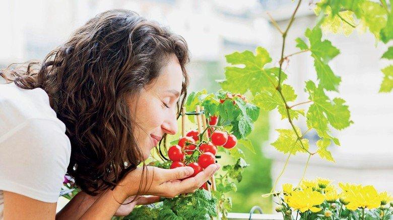 Lecker: Tomaten aus eigenem Anbau – die lassen sich auch in kleinen Kübeln ziehen.