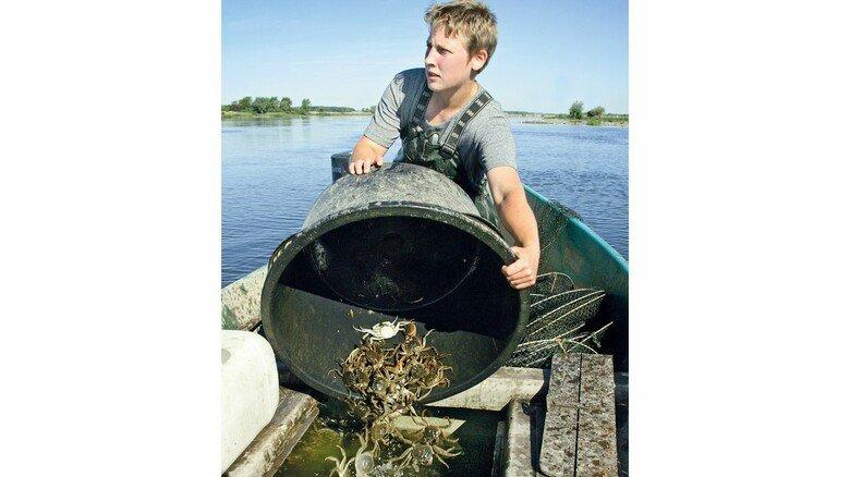 Guter Fang: Eine Fischerin mit Wollhandkrabben, die bei Dömitz unweit von Hitzacker aus der Elbe gezogen wurden.