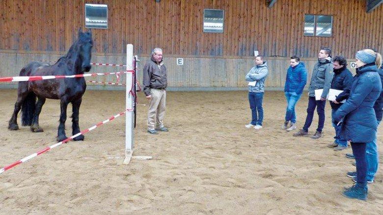 Ungewohnt: Meier lernte Interessantes auf einem Pferdehof. Foto: Werk