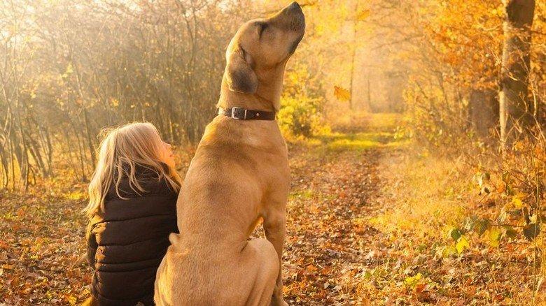 Herbstlicher Wald: Für viele bedeutet ein Waldspaziergung Erholung und Entspannung. Foto: Adobe Stock