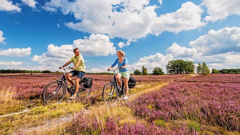 Paradies für Radler: Über 400 Kilometer Radwege gibt es in der Heide.