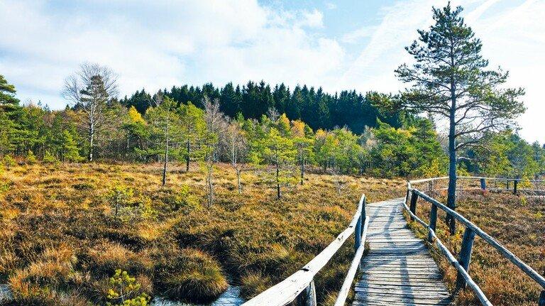 Auf dem Holzweg: Gut zwei Kilometer lang ist der Wanderpfad durch das Schwarze Moor in der Rhön.