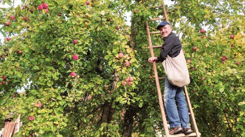 Allgäu: Gleich sieben Streuobst-Wanderwege führen an den leckeren Früchten vorbei. Foto: Fotolia