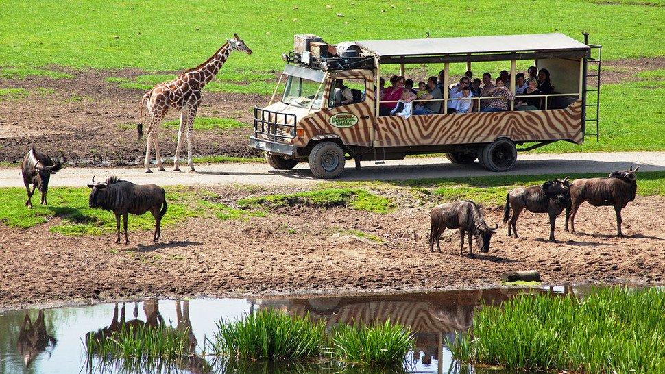 """Affen, Tiger, Giraffen und Co.: Auf der """"Serengeti-Safari"""" kann man mitten in Niedersachsen über 1.500 Wildtiere aus aller Welt entdecken."""