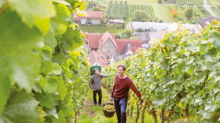 Franken: Die Weinlese hat begonnen. Alles über den Rebensaft erfahren Besucher auch im Museum. Foto: Getty