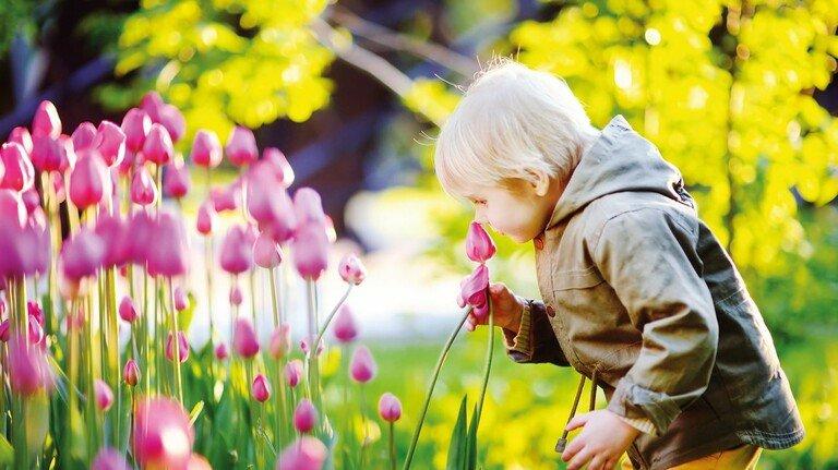 Bunt: Von Frühling bis Herbst blüht es je nach Saison in den Beeten der bayerischen Landesgartenschauen.