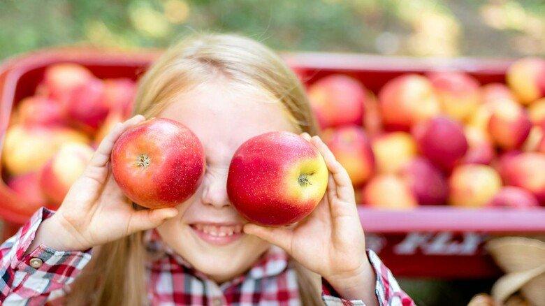 Naturprodukt Apfel: In Deutschland gibt es rund 2.000 unterschiedliche Arten.
