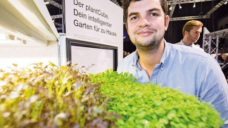 Erntet Salat: Agrilution-Mitbegründer Phillip Wagner. Foto: Bodmer