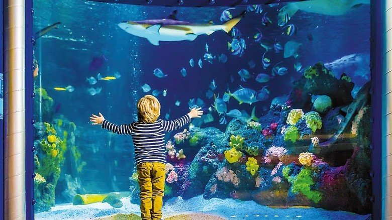 So schön bunt: 3500 Tiere tummeln sich im Sea Life in Konstanz. Foto: Ulrich Perrey