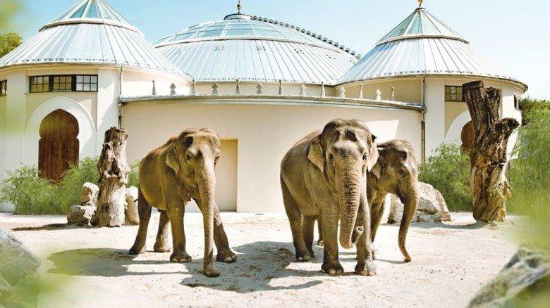 Rüsselfertig: Neue Außenanlage für die Elefanten im Tierpark Hellabrunn. Foto: Tierpark Hellabrunn